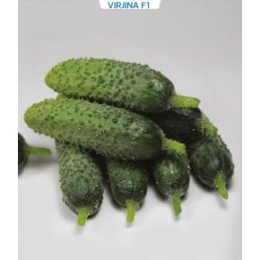 Hibrit Kornişon Salatalık Tohumu - Virjina F1 - 1.000 Adet Tohum