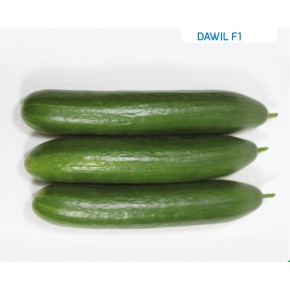 Hibrit Salatalık Tohumu - Dawil F1 - 1.000 Adet Tohum