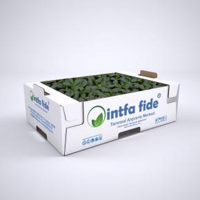 Hibrit Oturak Salatalık Fidesi - Brone F1 - 216 Adet