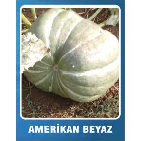 Balkabağı Tohumu Amerikan Beyaz - 1 kg