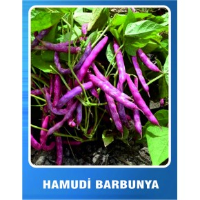 Barbunya Tohumu Hamudi Tipi (Oturak) - 10 gr