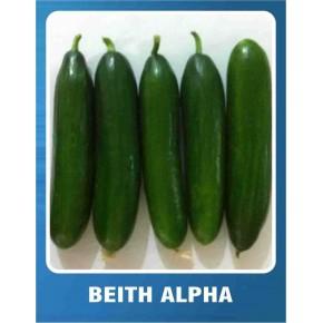 Salatalık Tohumu Beith Alpha - 10 gr