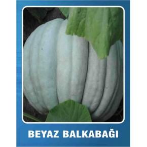 Beyaz Balkabağı Tohumu - 10 gr