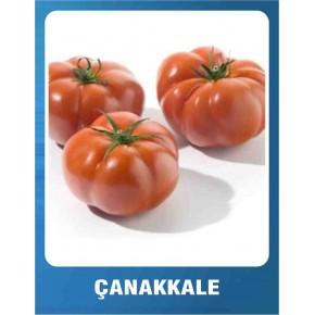 Domates Tohumu Çanakkale - 5 gr