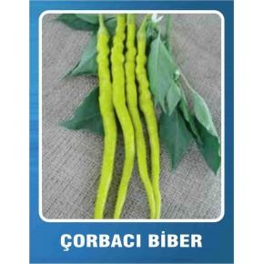 Biber Tohumu Çorbacı Turşuluk - 10 gr