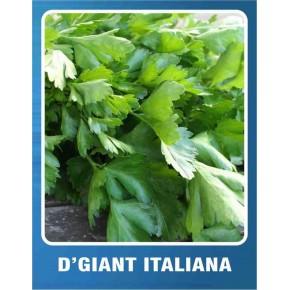 Maydanoz Tohumu D'Giant İtaliana - 10 gr