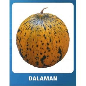 Kavun Tohumu Dalaman - 10 gr