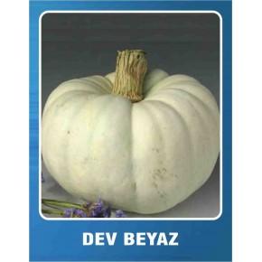 Balkabağı Tohumu Dev Beyaz - 1 kg