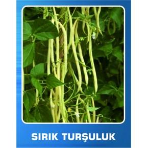 Sırık Turşuluk Fasulye Tohumu - 1 kg