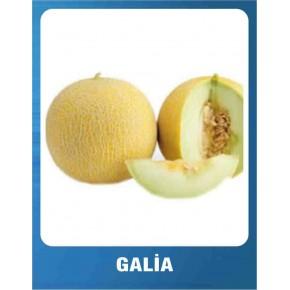 Galia Kavun Tohumu - 10 gr
