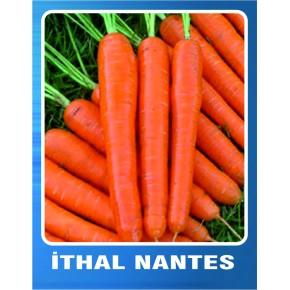 İthal Nantes Havuç Tohumu - 10 gr