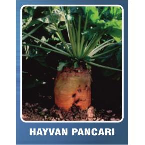 Hayvan Pancarı Tohumu - 10 gr