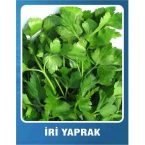 İri Yaprak Maydonoz Tohumu - 10 gr