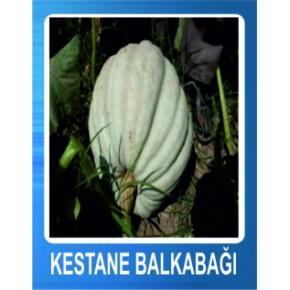 Kestane Balkabağı Tohumu - 10 gr