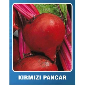 Kırmızı Pancar Tohumu - 10 gr