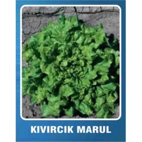 Marul Tohumu Kıvırcık - 10 gr