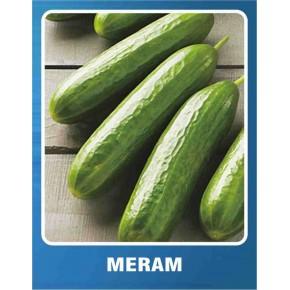 Salatalık Tohumu Meram - 10 gr