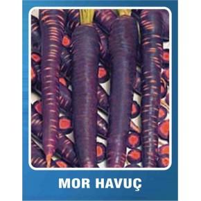 Mor Havuç Tohumu - 10 gr
