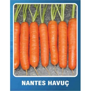 Havuç Tohumu Nantes - 100 gr