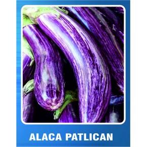 Alaca Patlıcan Tohumu - 10 gr