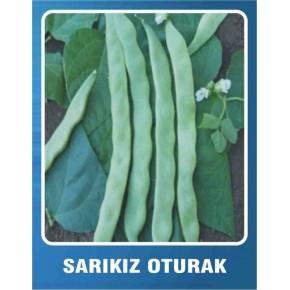 Fasulye Tohumu - Sarıkız (Oturak) - 10 gr