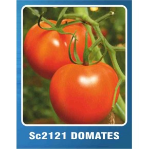Domates Tohumu SC-2121 - 10 gr