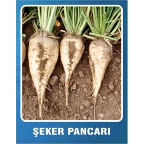 Şeker Pancarı Tohumu - 10 gr