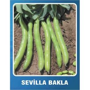 Sevilla Bakla Tohumu - 10 gr