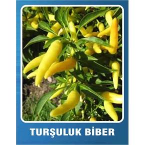 Biber Tohumu Turşuluk - 10 gr