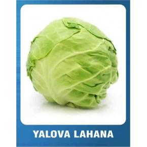 Yalova Lahana Tohumu - 10 gr