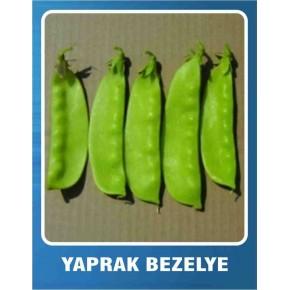 Yaprak Bezelye Tohumu - 10 gr