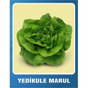 Marul Tohumu Yedikule - 100 gr