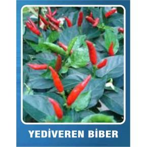 Biber Tohumu Yediveren - 10 gr