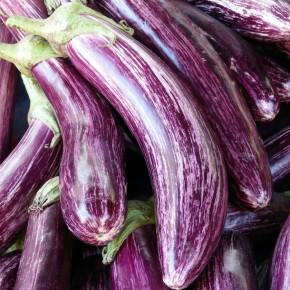 Alaca Patlıcan Tohumu - 25 Adet