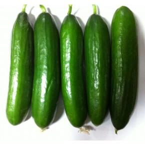 Salatalık Tohumu Beith Alpha - 25 Adet