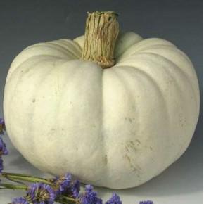 Balkabağı Tohumu Dev Beyaz - 25 Adet