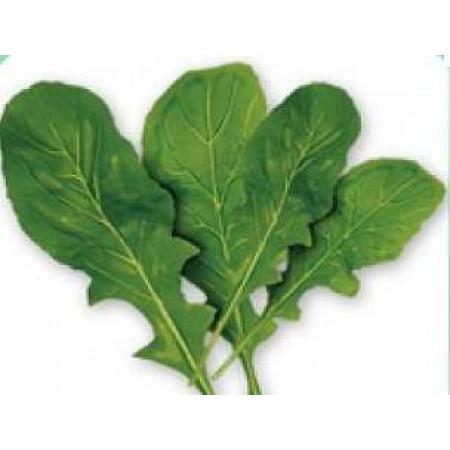 Tere Tohumu Geniş Yapraklı - 25 Adet