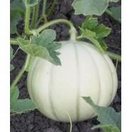 Gönen Beyaz Kavun Tohumu - 25 Adet
