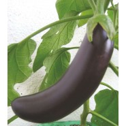 Patlıcan Tohumu Kemer - 25 Adet