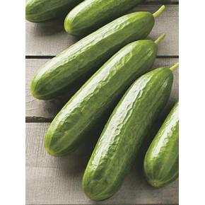 Salatalık Tohumu Meram - 25 Adet