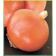 Aypare Soğan Tohumu-1 kg