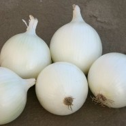 Beyaz Soğan Tohumu Flames - 1 Kg