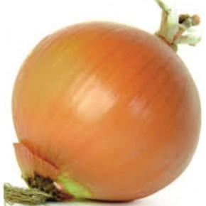 Kaşif Soğan Tohumu - 1 kg