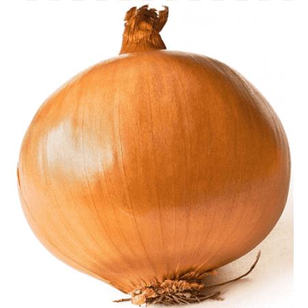 Polat Soğan Tohumu - 1 kg