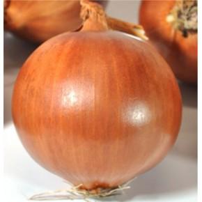 Asya94 Soğan Tohumu-1 kg