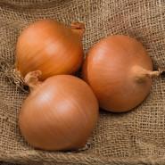 Sarıhan Soğan Tohumu - 1 kg