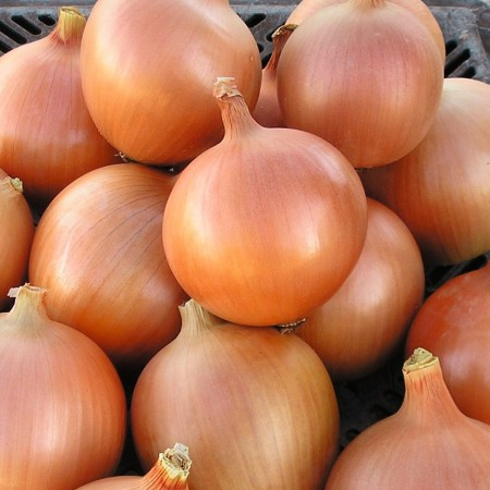Yellow Growe Soğan Tohumu - 1 kg