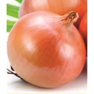 Ulus Soğan Tohumu - 1 kg
