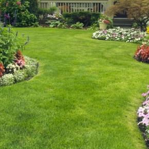 Çim Tohumu 3 Mix Grass Karışımı - 10 kg