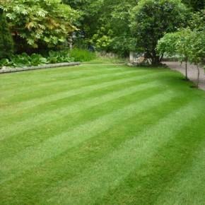 Çim Tohumu 4 Mix Grass Karışımı - 10 kg